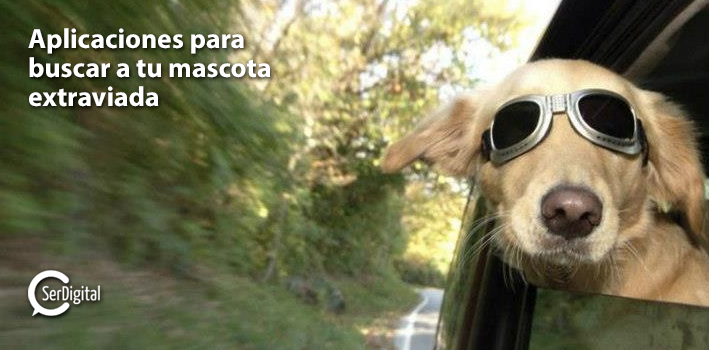 mascotas_portada